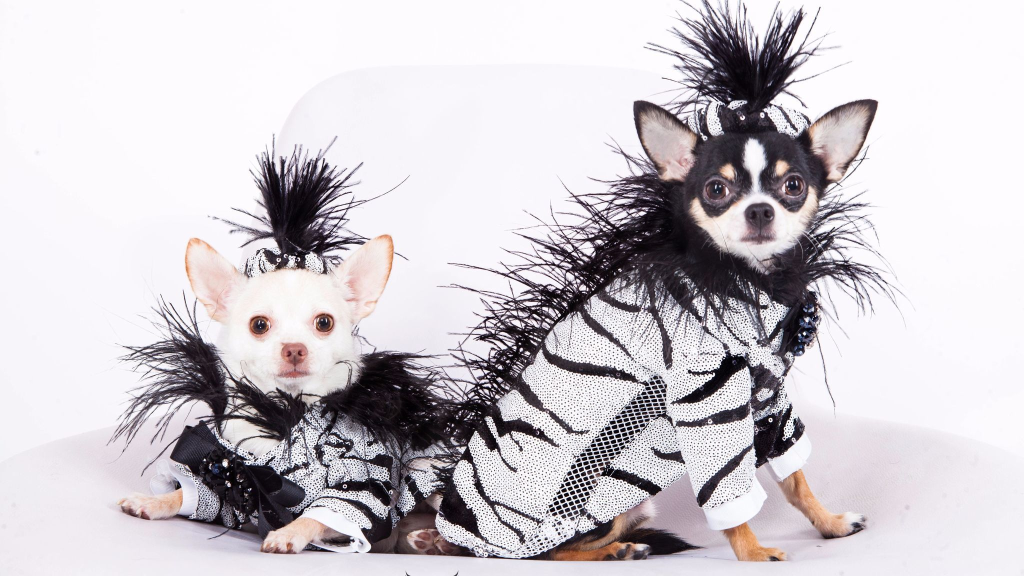 b7ea1daa Take a look at what the most fashionable pets are wearing these days ...