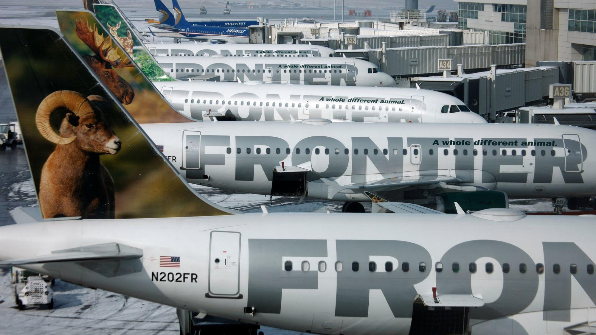 Frontier Airlines jets sit stacked up at gates at Denver International Airport.