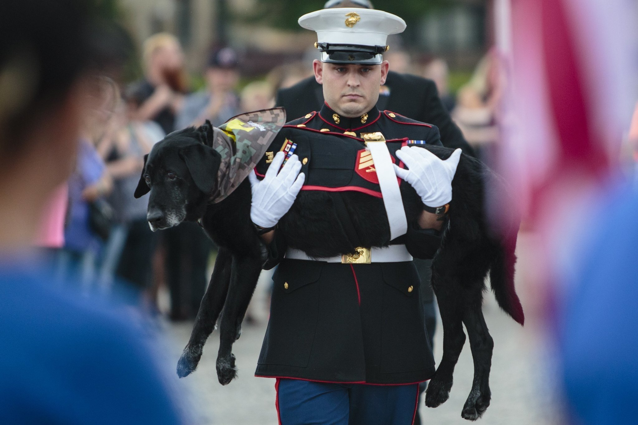 marine dog with cancer gets tear filled hero s farewell chicago