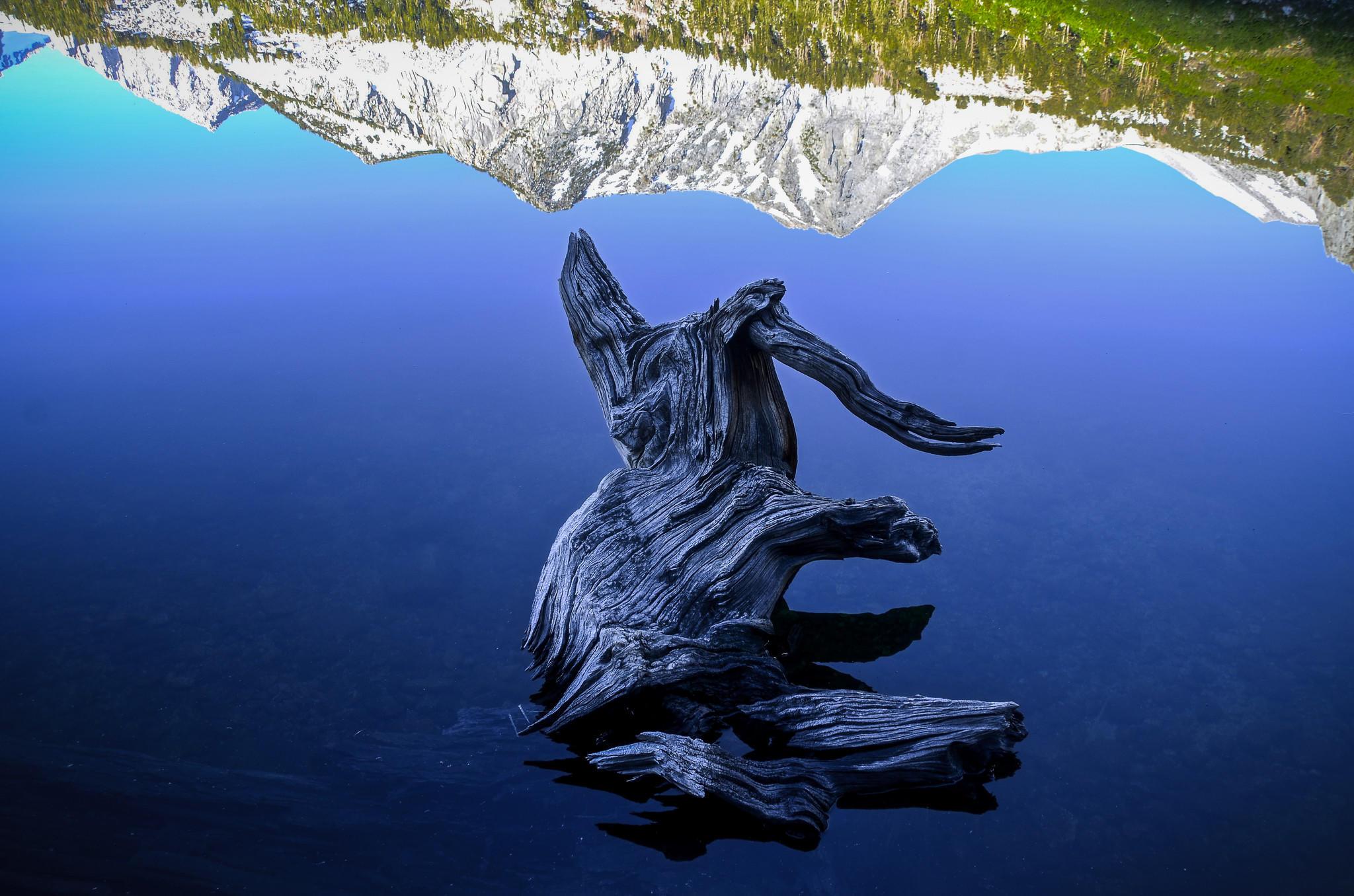 How a tenderfoot's horse trek in the Sierra showed him the