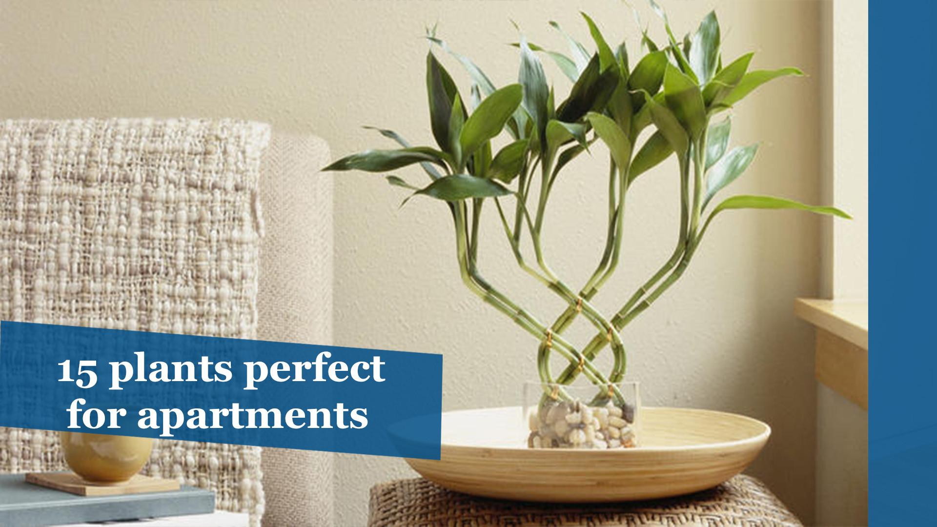15 Plants Perfect For Apartments Chicago Tribune