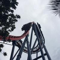 Busch Gardens Tampa Articles, Photos, and Videos - Orlando