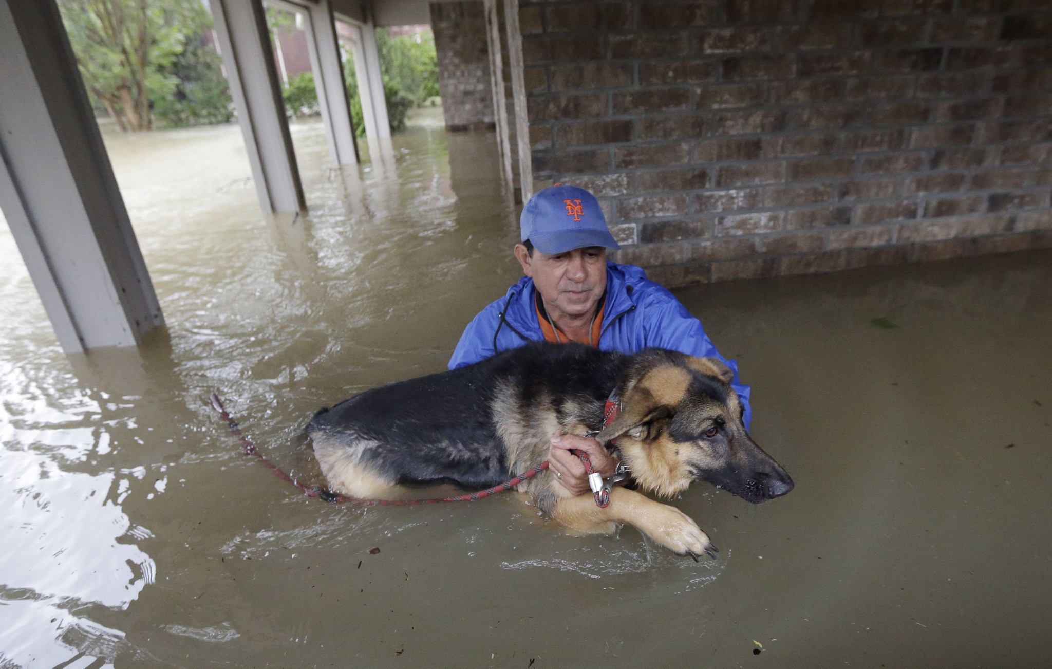Chicago Shelters Taking In Animals From Houston Will Clear