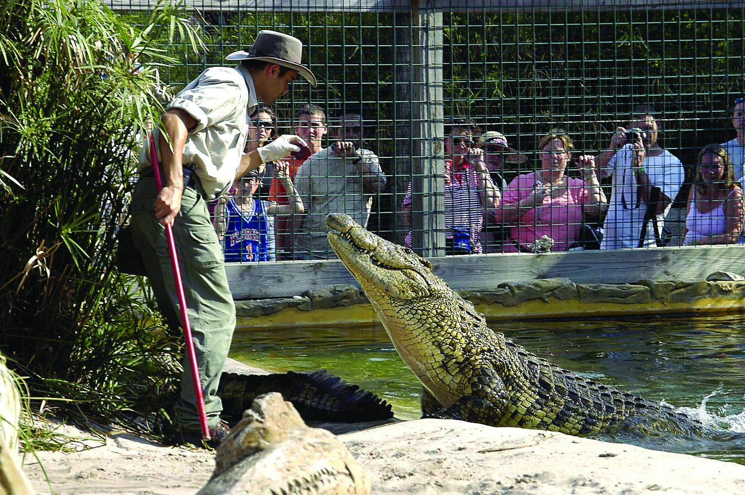 Orlando's Gatorland promises its critters won't get free during Irma - Chicago Tribune
