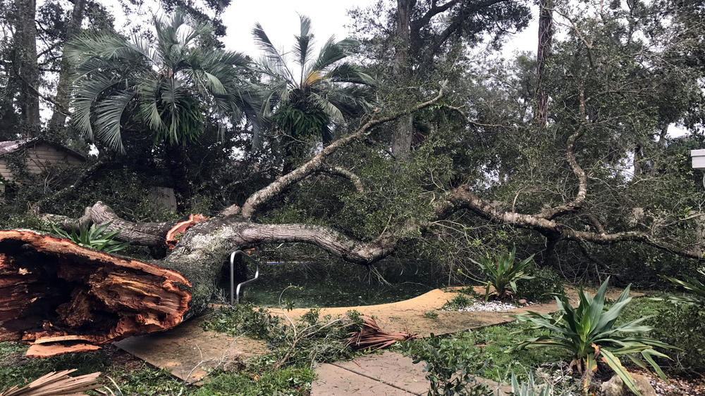 Downed trees were a common sight through much of central Florida. (John Armstrong/Orlando Sentinel)