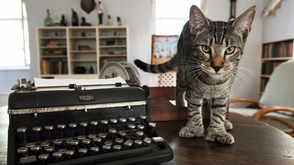 A six-toed cat at the Ernest Hemingway Home and Museum in Key West, Fla. (Florida Keys News Bureau)