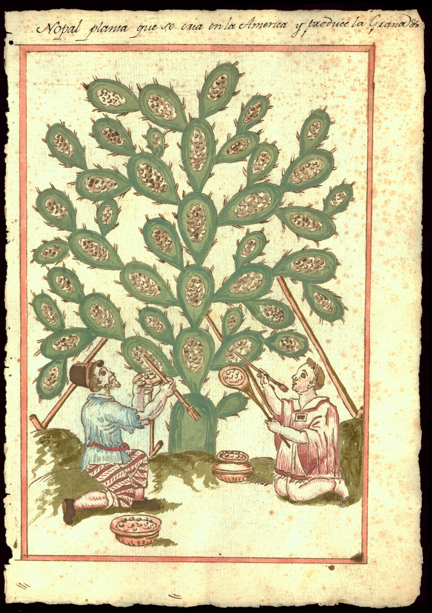 "A 17th century depiction of a nopal from a book — part of ""Visual Voyages,"" on view at the Huntington."