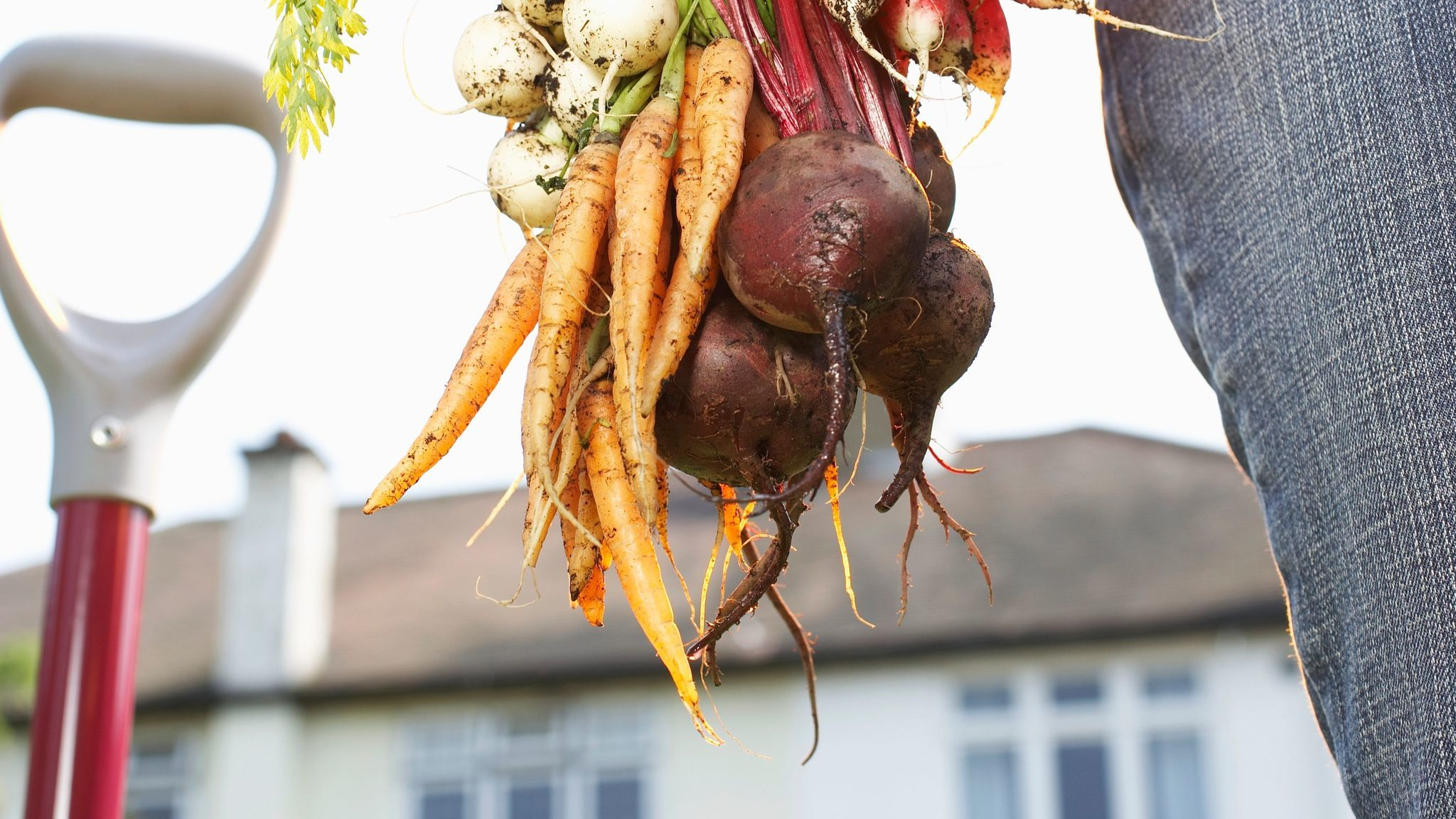 Carrots and beets.