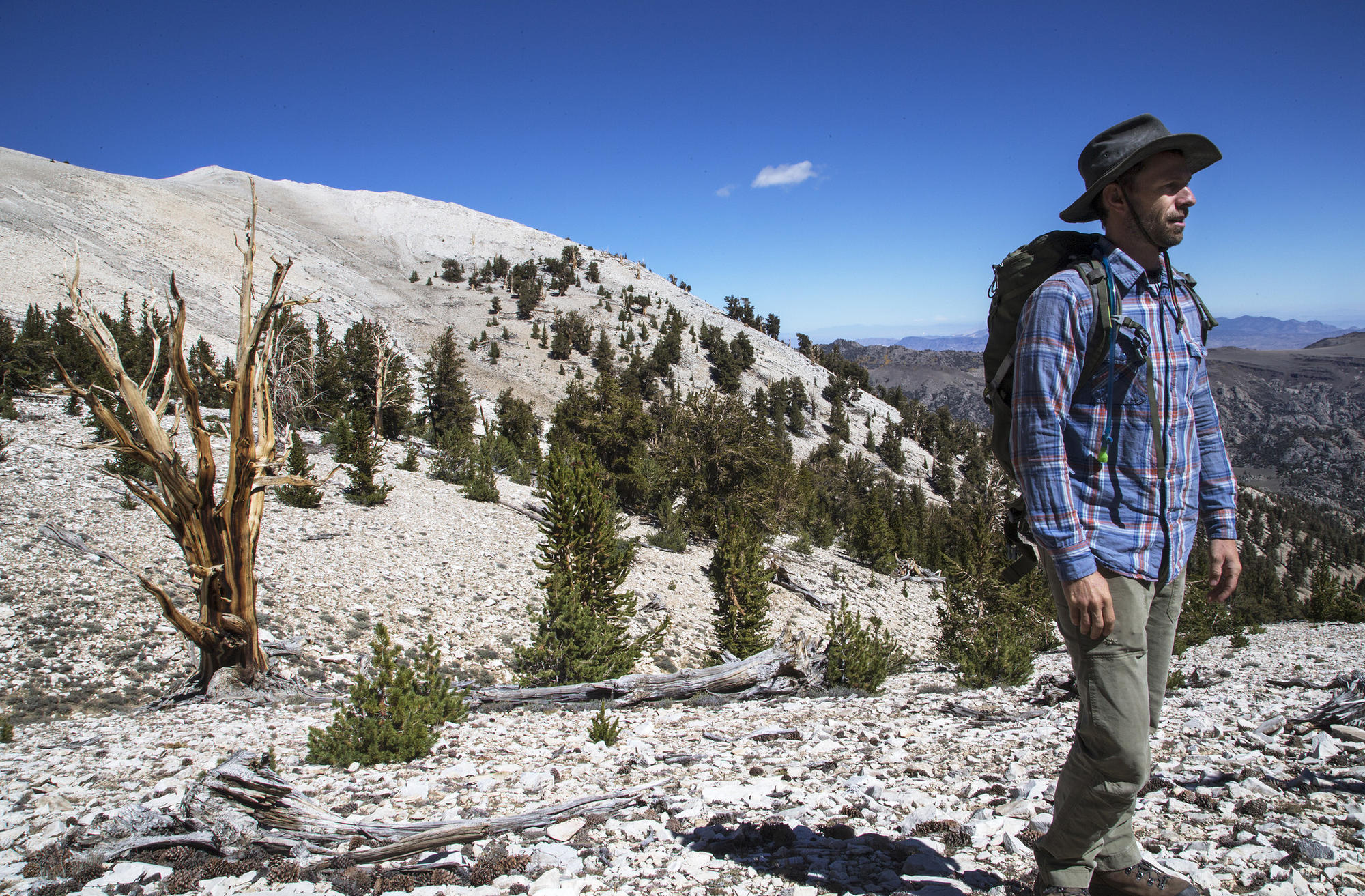 """It's pretty amazing,"" UC Davis biologist Brian Smithers says of climate change in the Ancient Bristlecone Pine Forest in California's White Mountains."