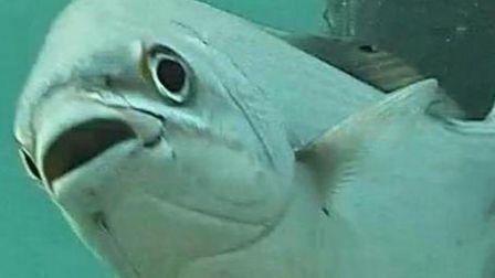 Deerfield S Por Underwater Webcam To Be Back Live In A Few Weeks Sun Sentinel