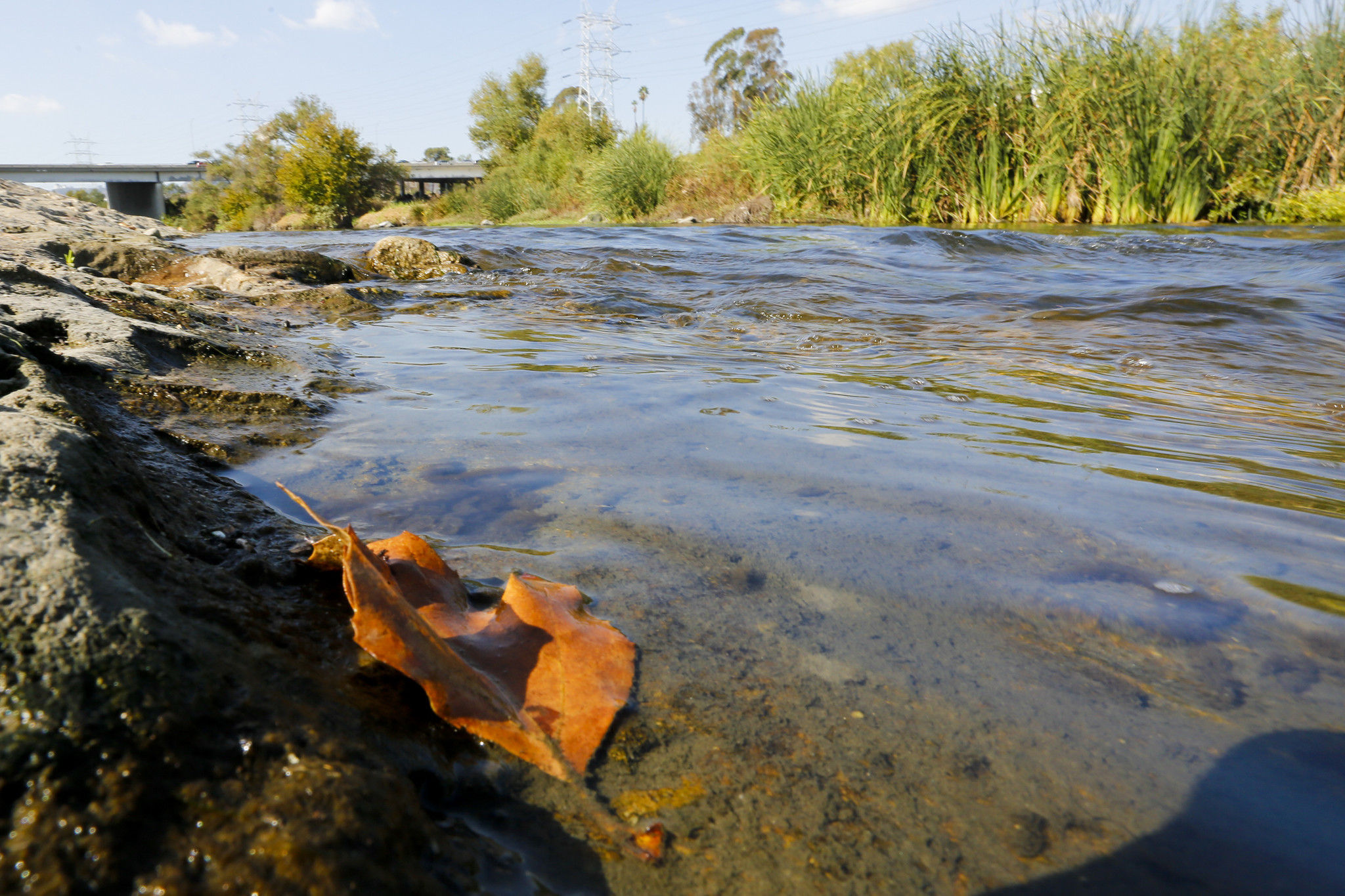 A leaf rests along the bank of the Los Angeles River in Elysian Valley.
