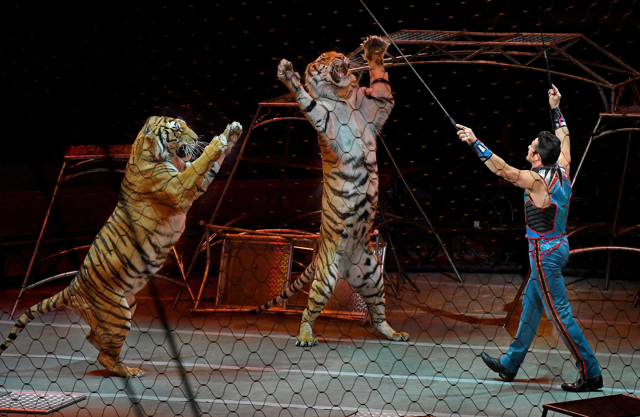 The Strange And Deadly Saga Of 15 Ringling Bros Circus