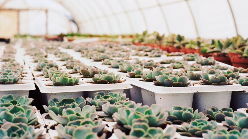 Shown here is a greenhouse in Oceanside, Calif., for succulents and flowers. It's one of 100 floral farm partners working with The Bouqs in the U.S., Ecuador and Colombia.