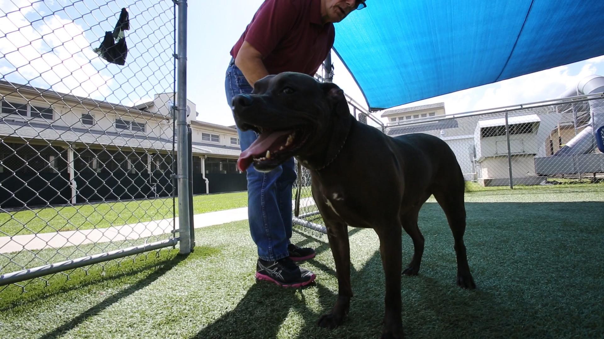 Longtime Orange County animal shelter dog spurs ...