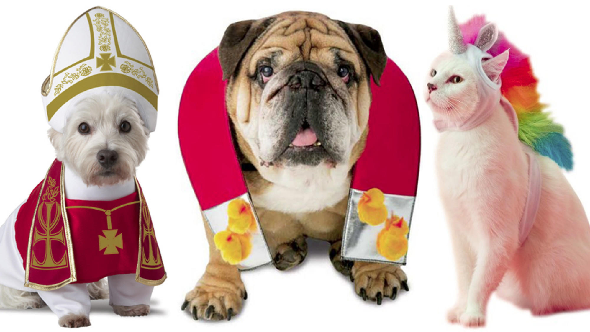 20 hilarious Halloween costumes for pets - Chicago Tribune