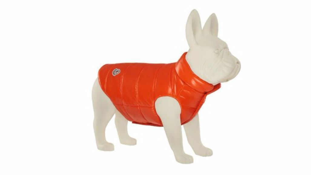 Moncler down puffer vest in a mini version for dogs.