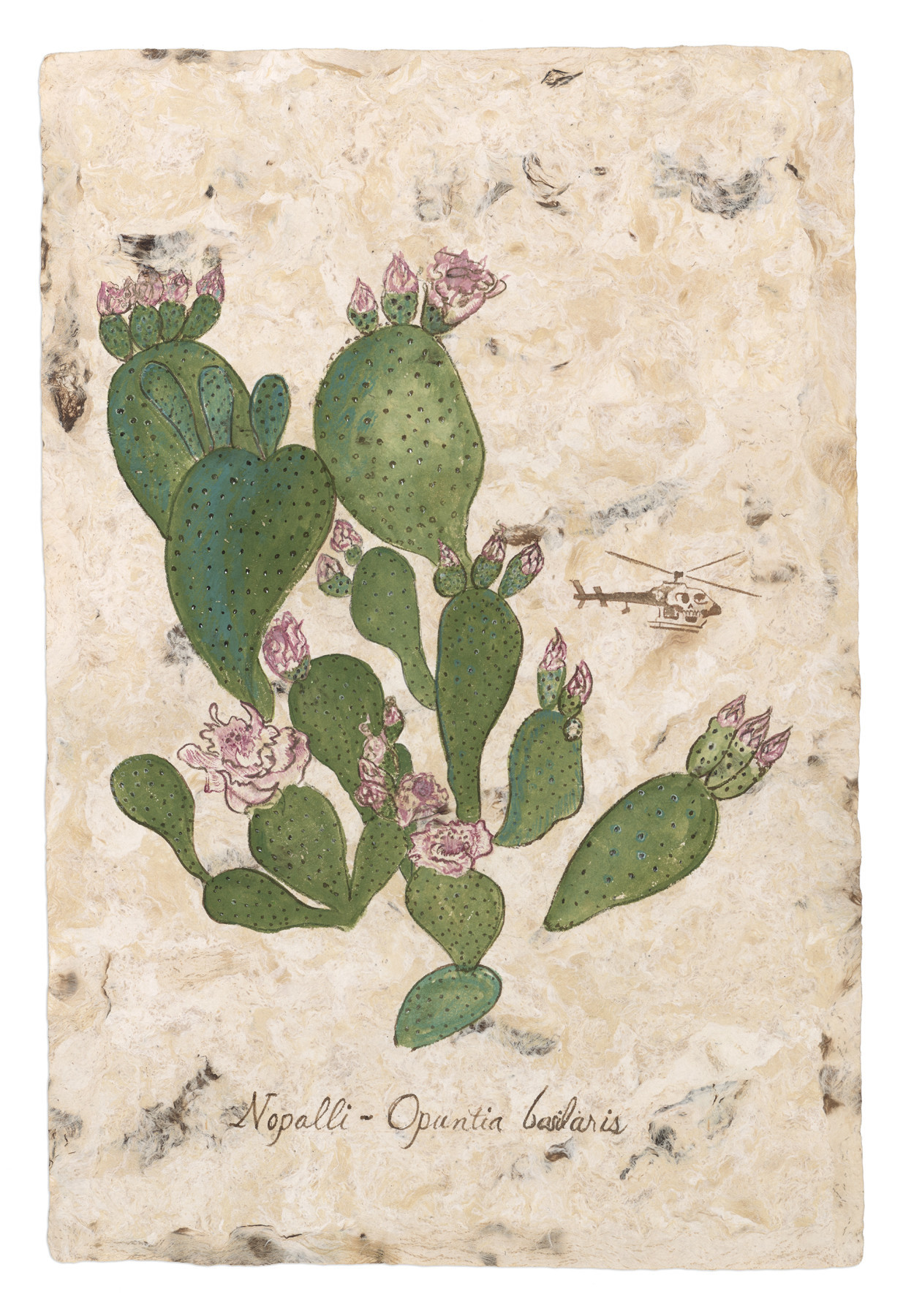 """Nopalli Opuntia basilaris from the Codex Rodriguez Mondragon,"" 2017, by Sandy Rodriguez in ""South of the Border."""
