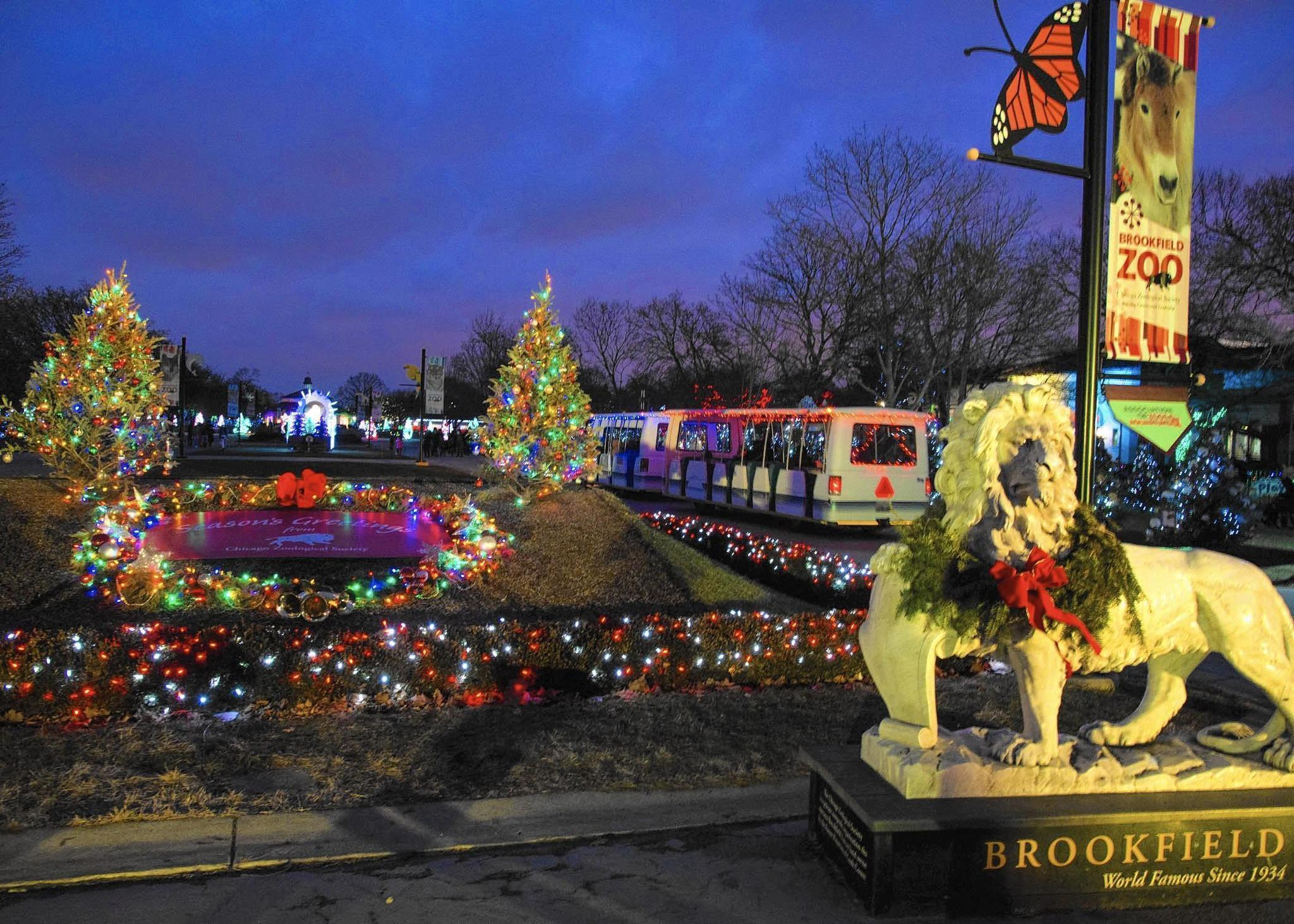 4 Foot Led Lights >> Sing to the animals at Brookfield Zoo's Holiday Magic - Chicago Tribune