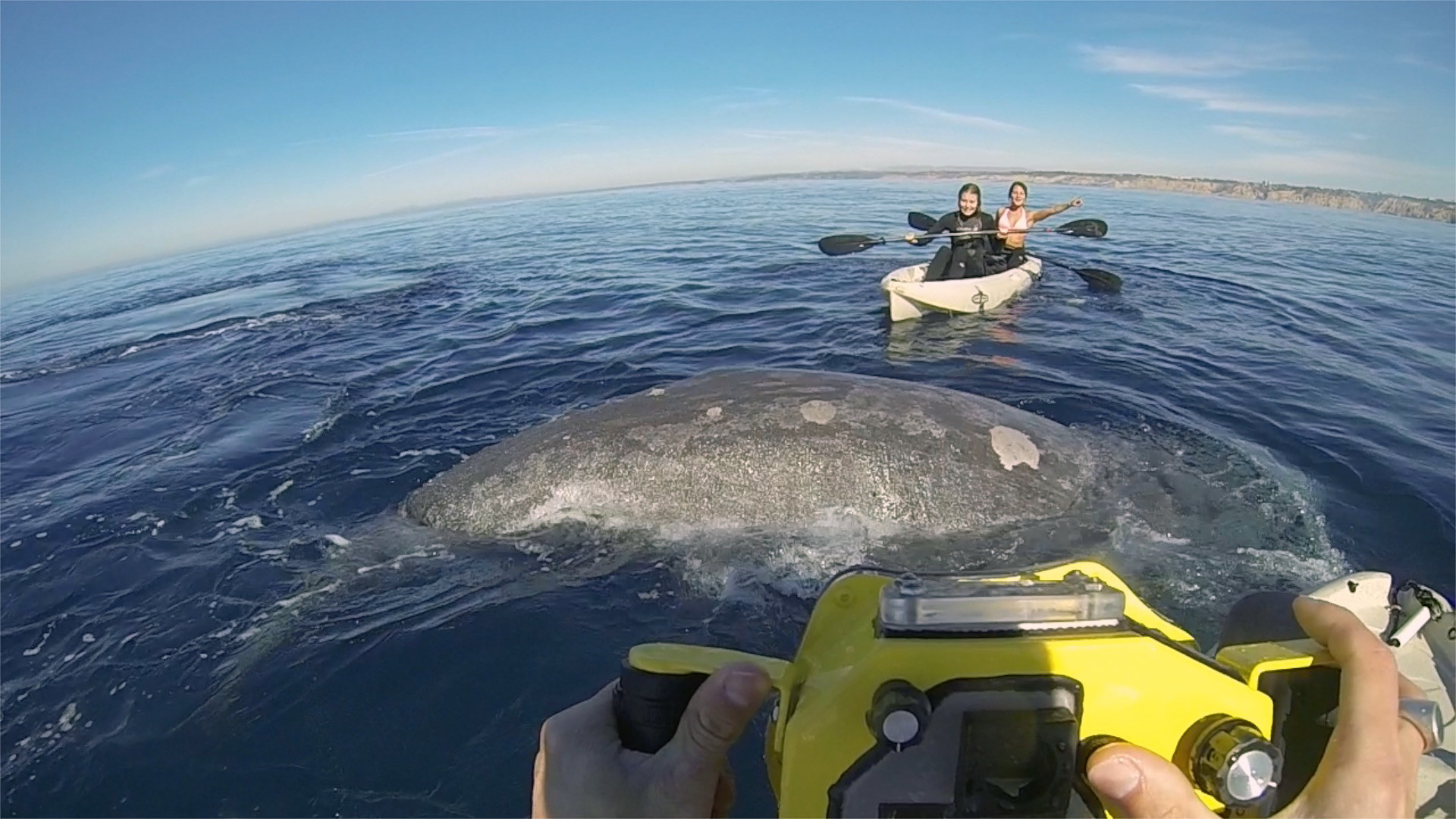 Between December and March, hundreds of grey whales make their annual journey from Alaska to Baja, p