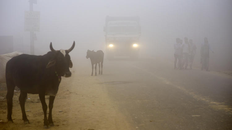 Cows stand by the side of a road as a truck drives with lights on through smog in Greater Noida, nea