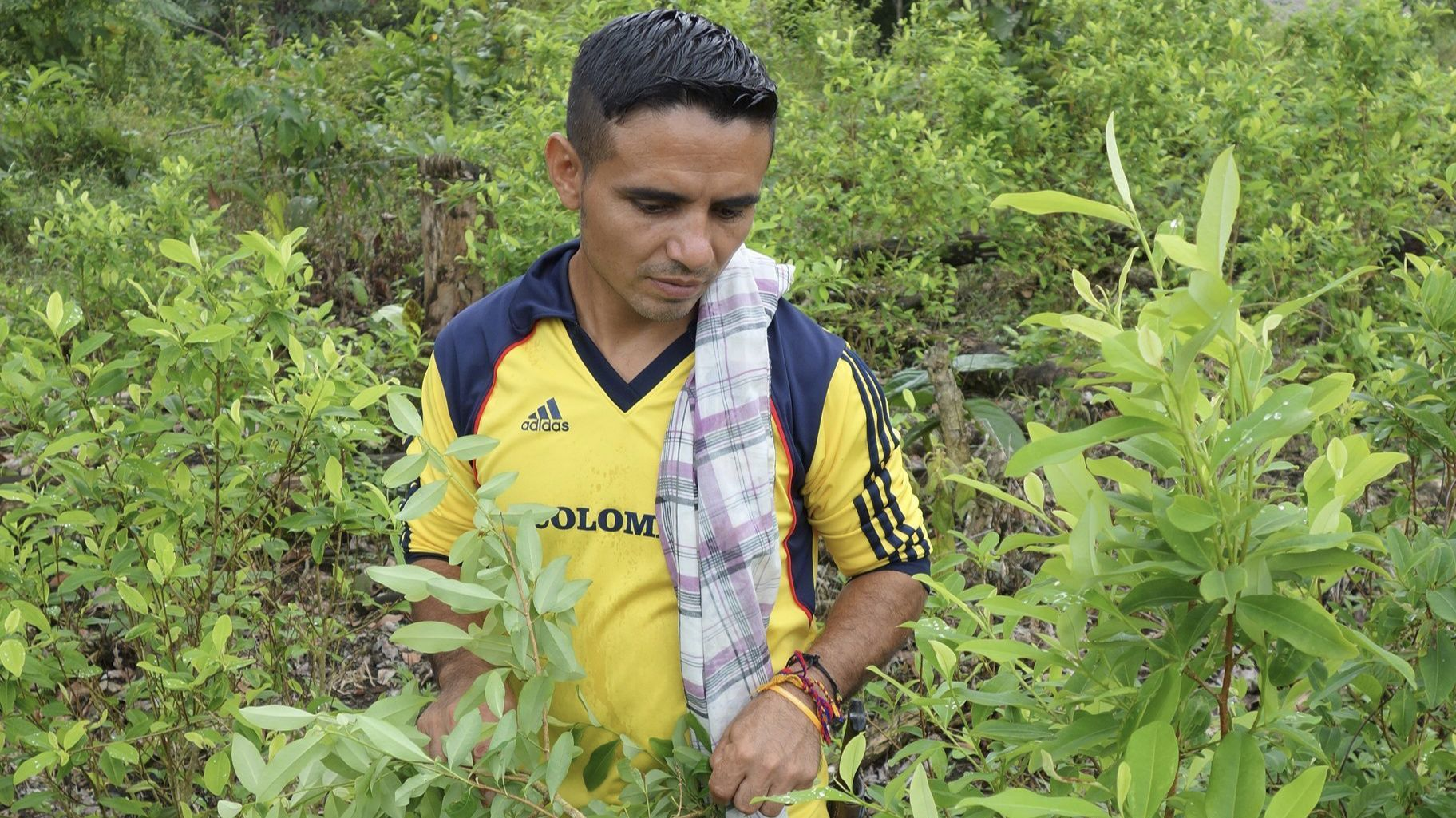 Colombian coca farmers, facing a threat to their livelihood, resist