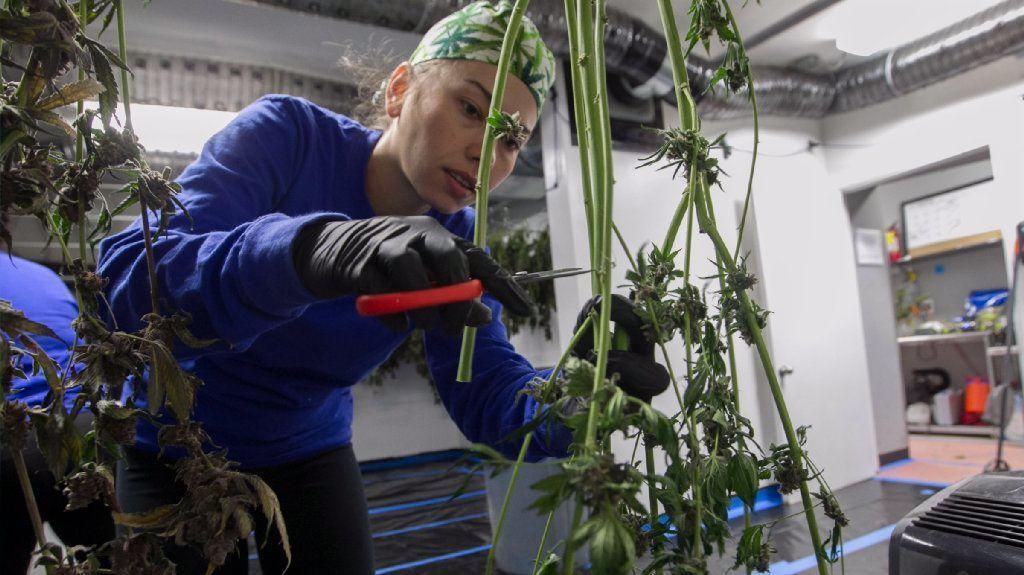 Is it legal to smoke marijuana in your backyard? An ...