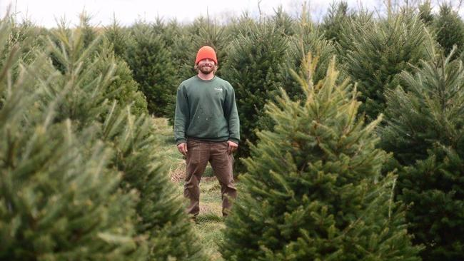 Christmas Tree Lot Near Me.There May Be A Run On Christmas Trees This Year As Shortage