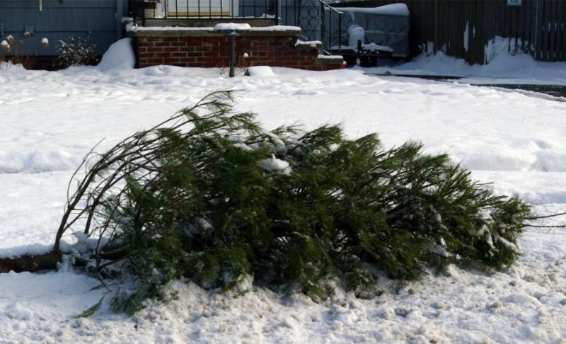 Residents to pay for Christmas tree removal in Naperville budget-cutting  plan - Naperville Sun - Residents To Pay For Christmas Tree Removal In Naperville Budget