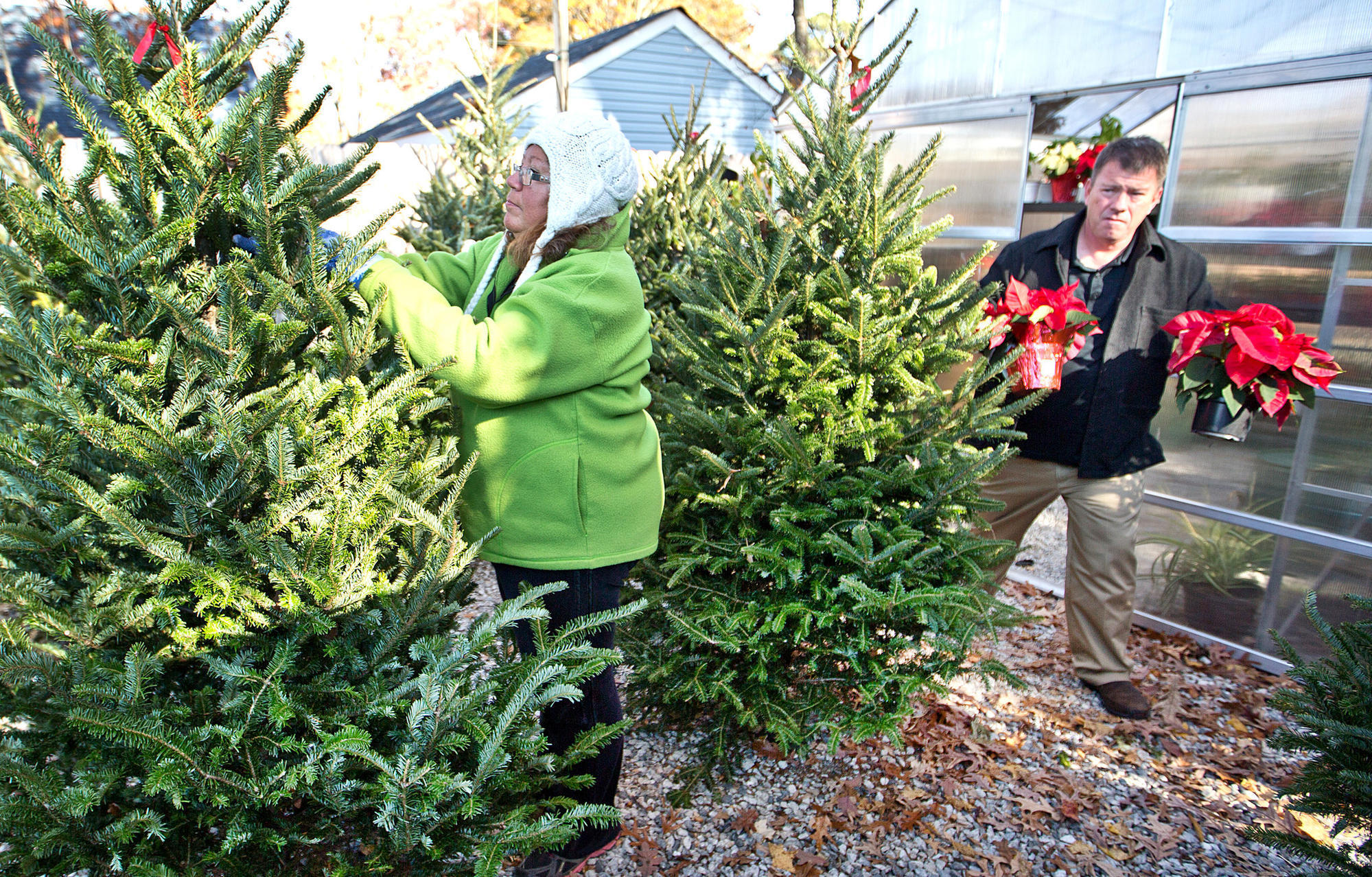 State Christmas tree farms provide fresh products for ...