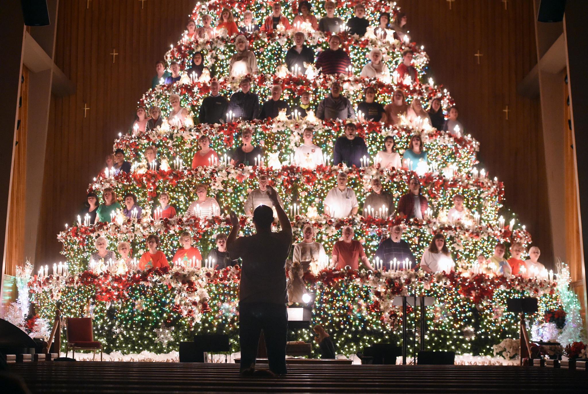 Living Christmas Tree Returns