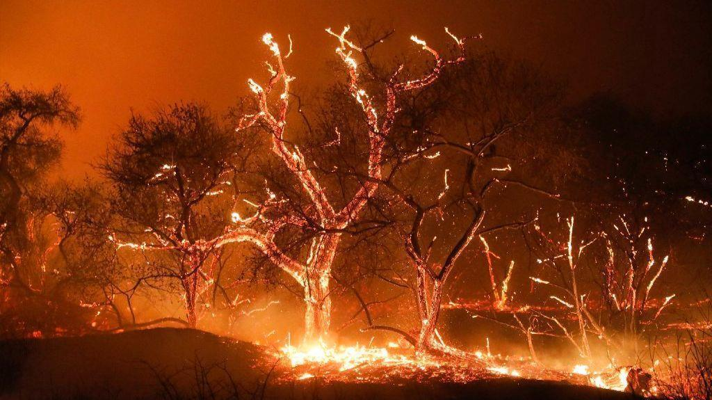 Lilac Fire Pictures >> Lilac Fire 95 Percent Contained The San Diego Union Tribune