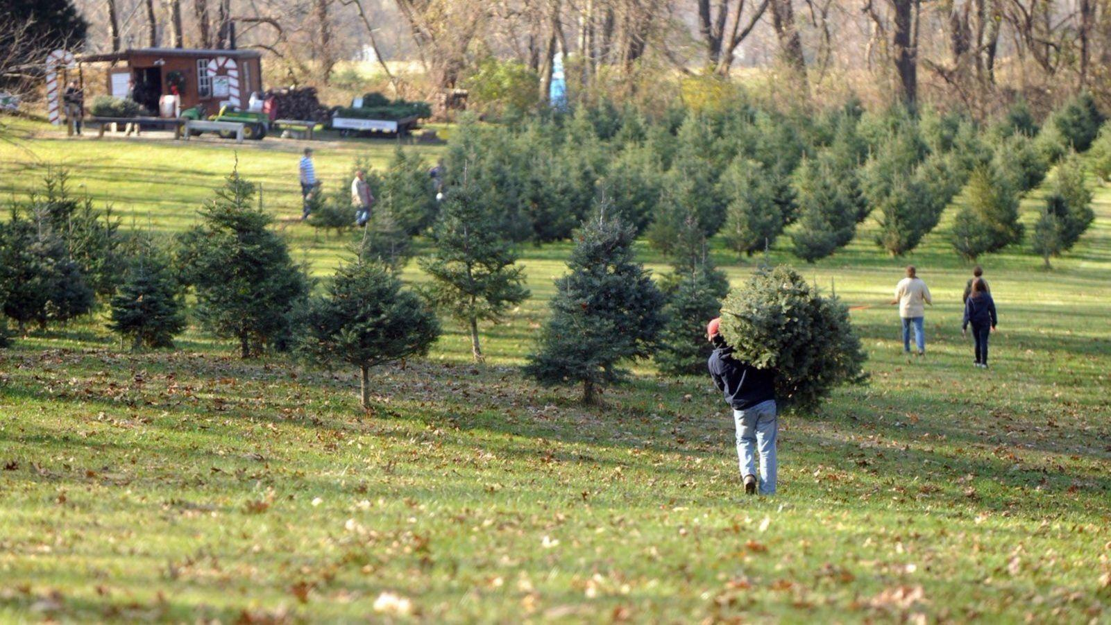 Baltimore County sets new rules for Christmas tree disposal ...