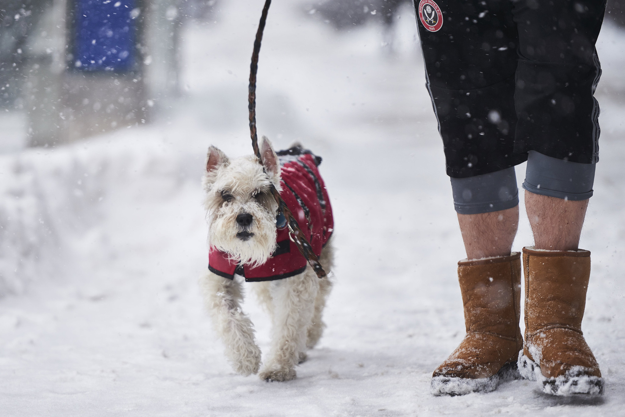 People are leaving dogs to freeze to death in the bitter ...