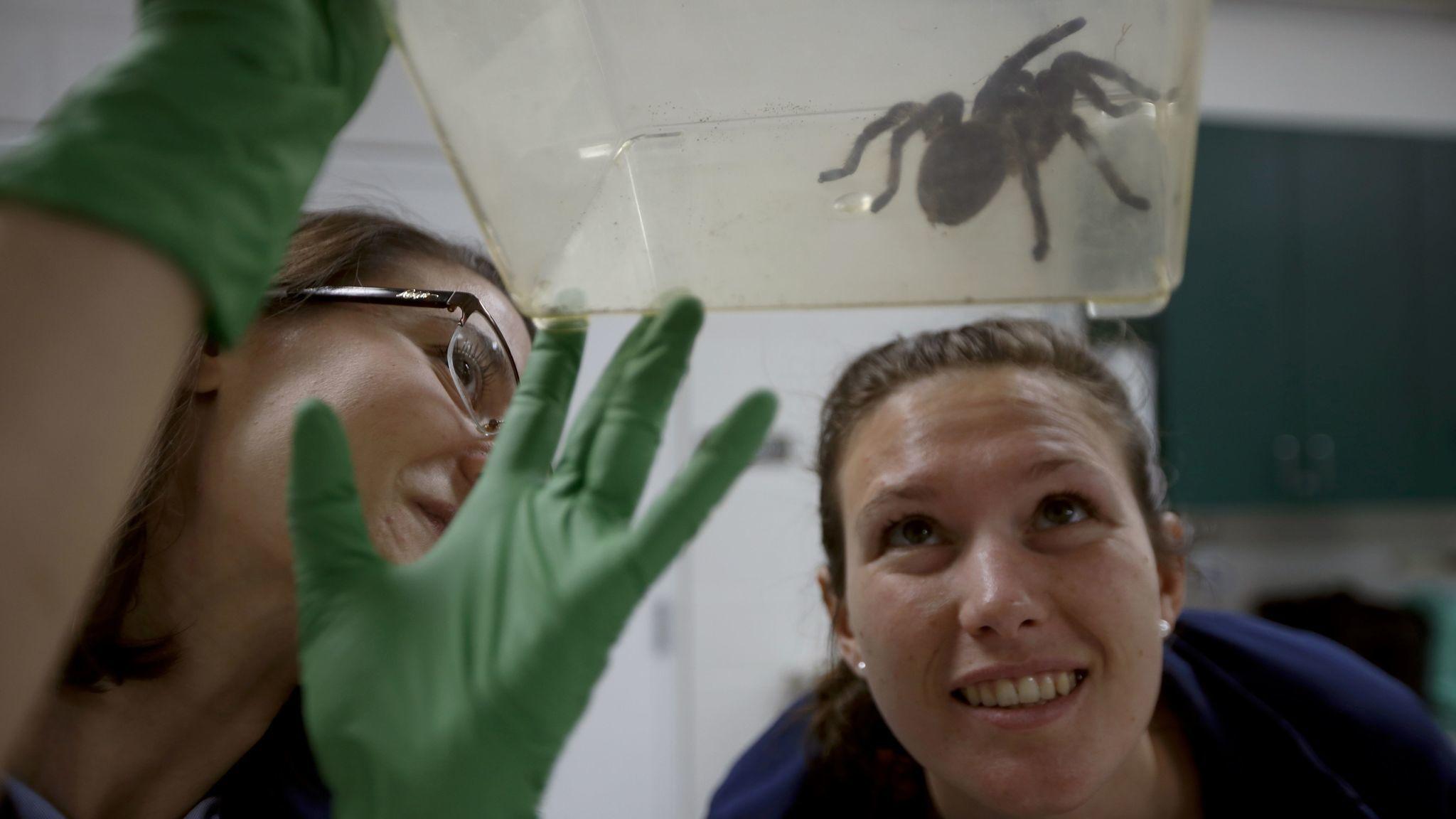 SACRAMENTO, CA OCTOBER 5, 2017: Veterinarian Jenessa Gjeltema (CQ), left, a Curly-Haired Tarantul