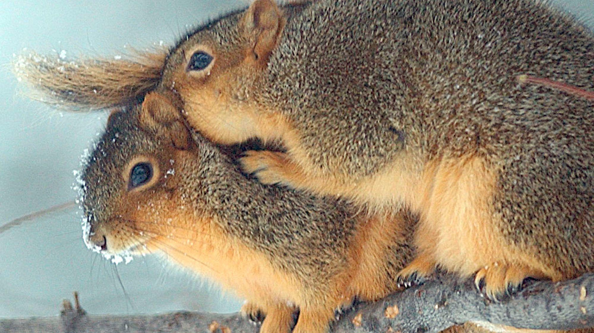 squirrels survive  extreme cold  morning call