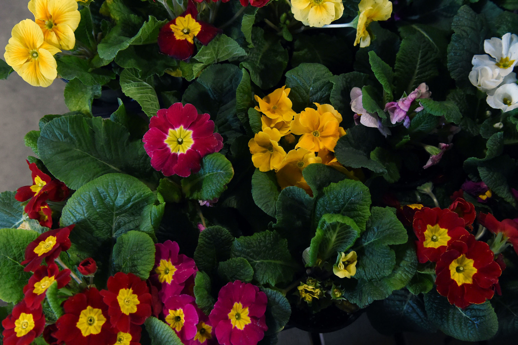 maryland home and garden show at the timonium state fairgrounds