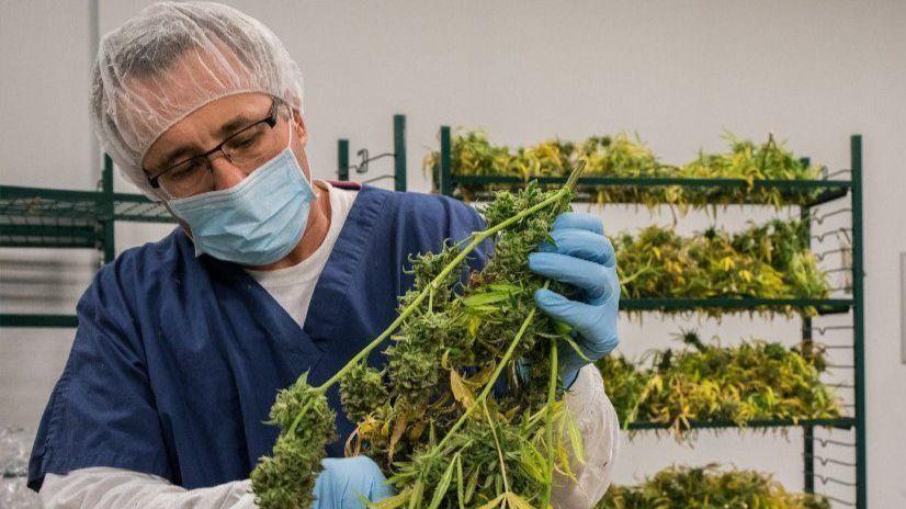 main bank for illinois u0026 39  medical marijuana industry is