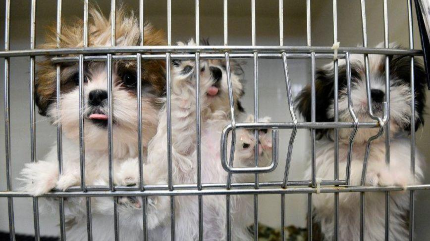 Selling Dogs From Puppy Mills Prohibited By Bill Approved By