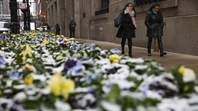 Image result for chicago spring snow