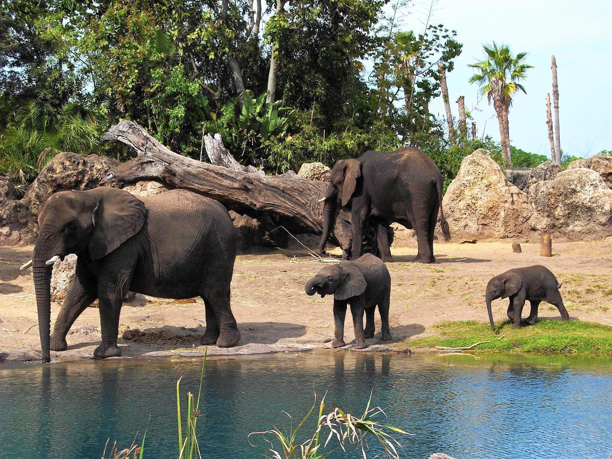 20 Things You May Not Know About Disney S Animal Kingdom Which