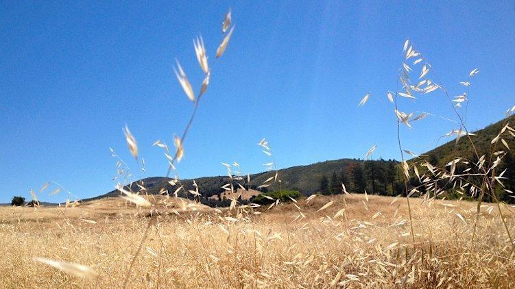 San Diego's driest year ever: This year is in the running