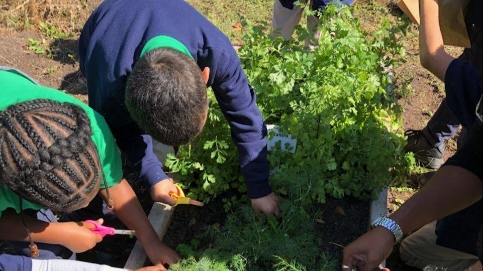 School Gardens Help Kids Learn Importance Of Fruit Vegetables Orlando Sentinel