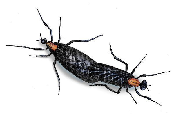 Love Bug Season Is Back In Florida They Mate They Splat Theyre