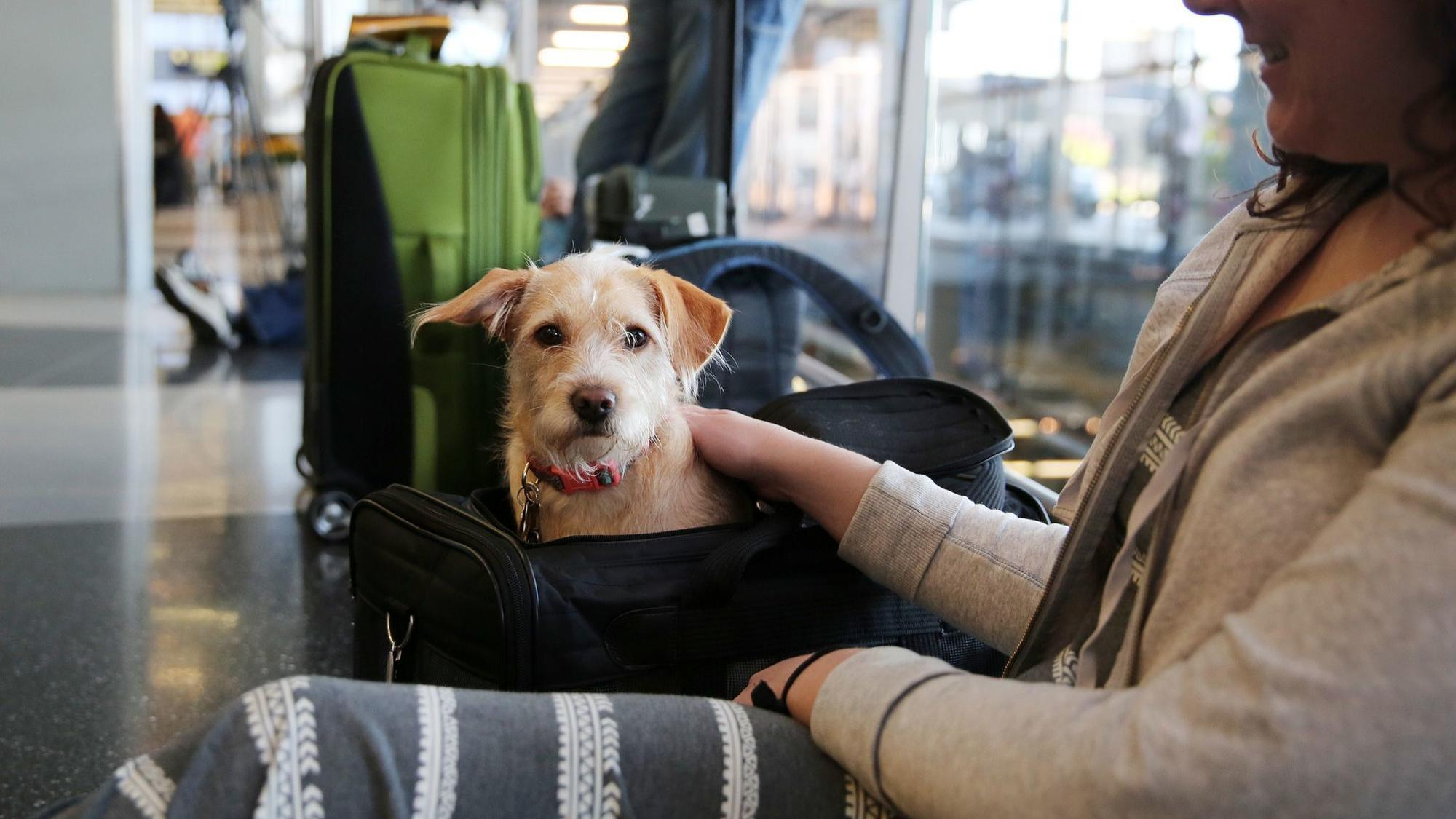 United places new restrictions on pets traveling in cargo ...
