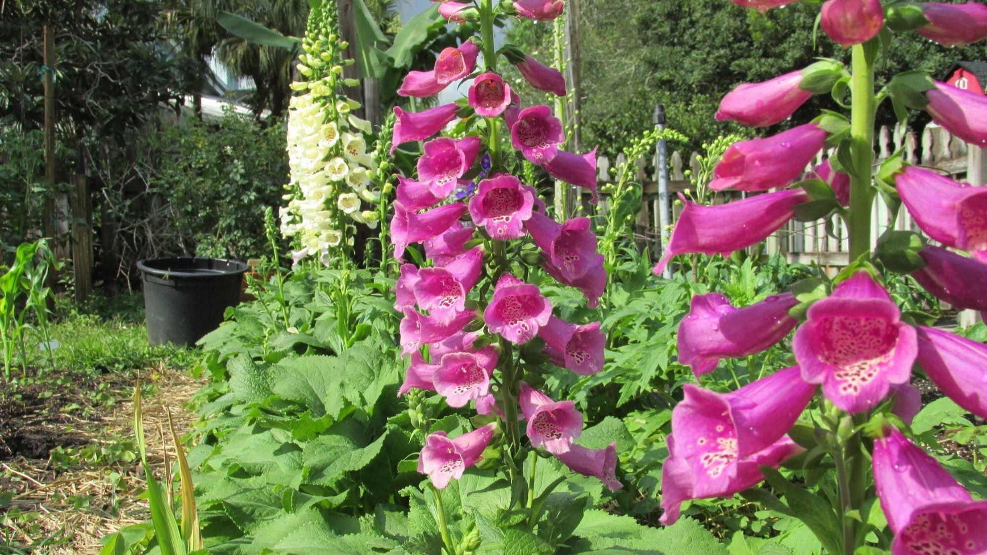Great Flowers That Need An Early Start Orlando Sentinel