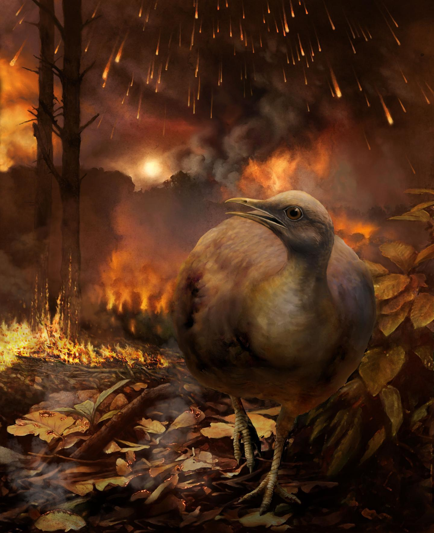 Bird after asteroid