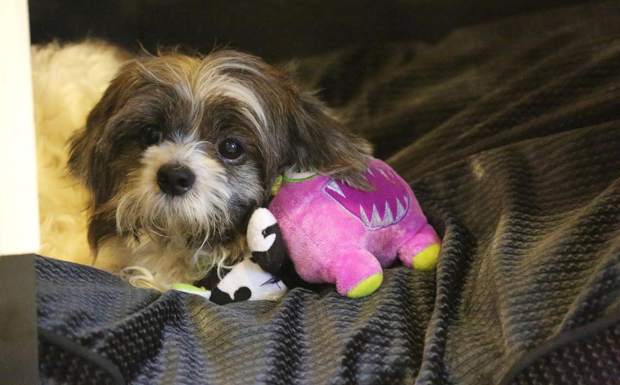 orlando dog adoption