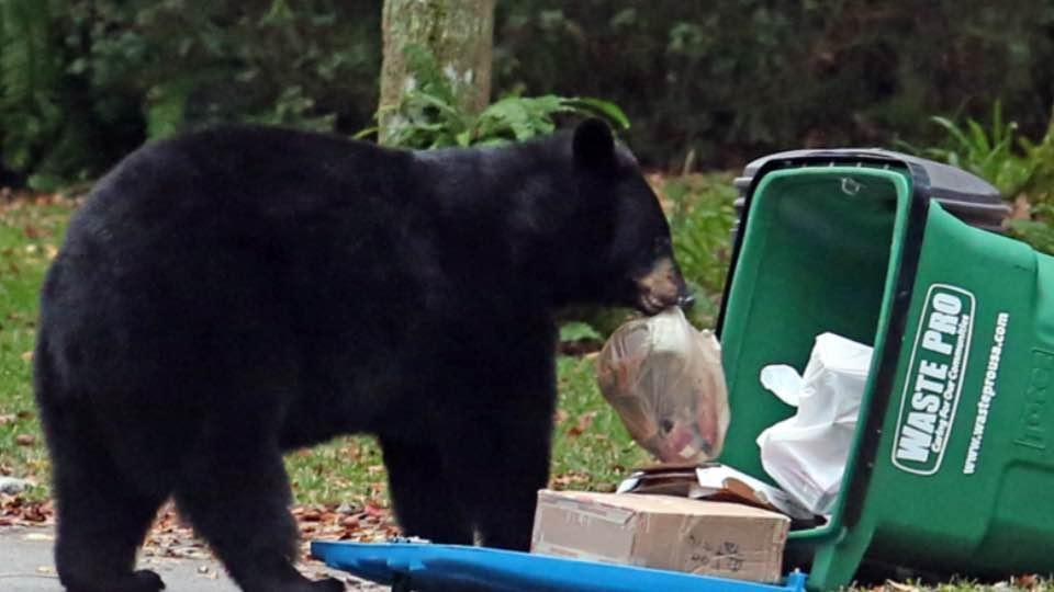 Fwc Has 500 000 Available Again For Bear Resistant Trash