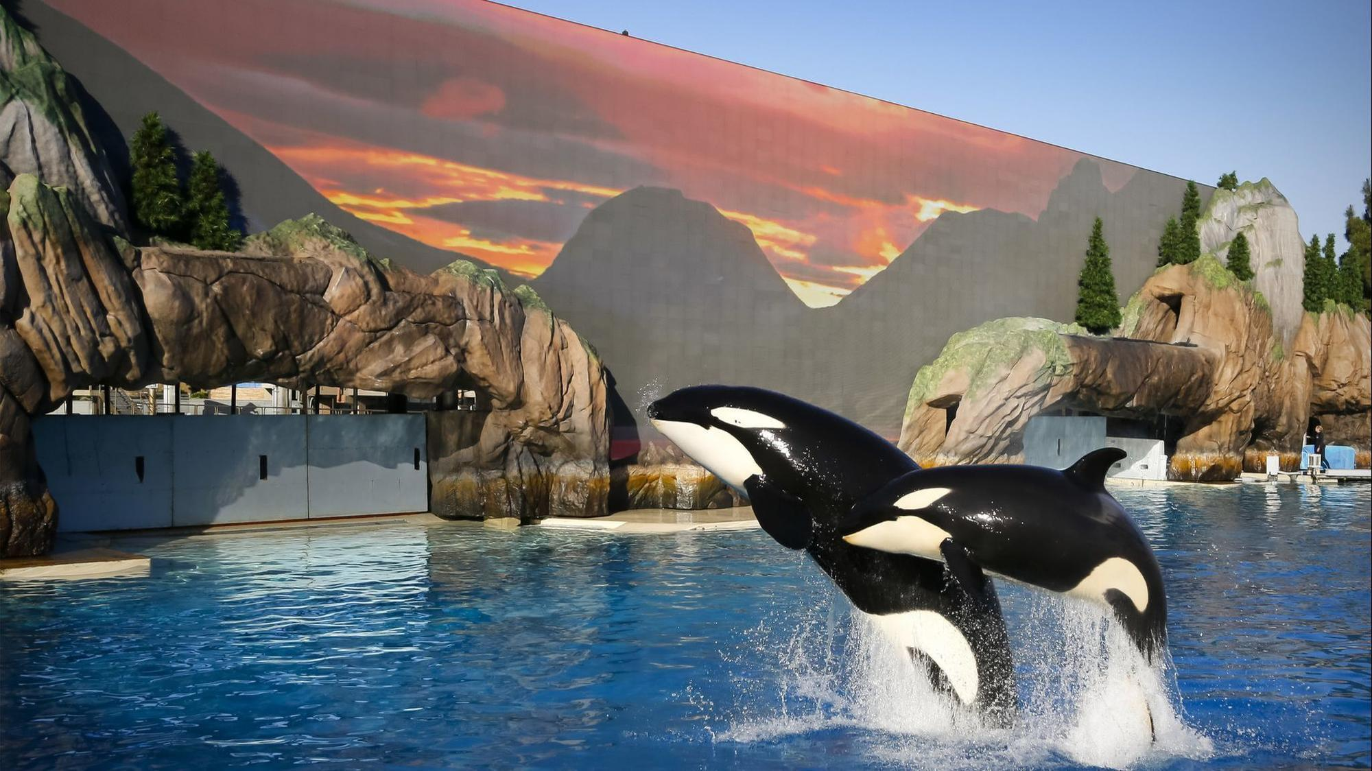 SeaWorld says no to straws, plastic bags in its parks