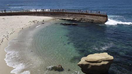 Ellate Court Says City Law Barring Humans From Children S Pool During Seal Pupping Season Legal